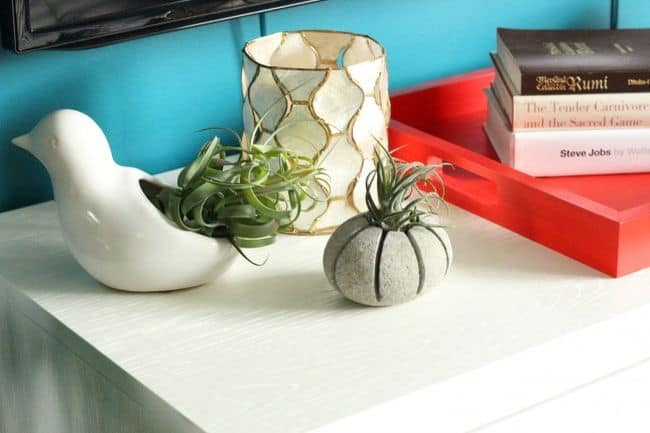 Air Plant Wall Holder