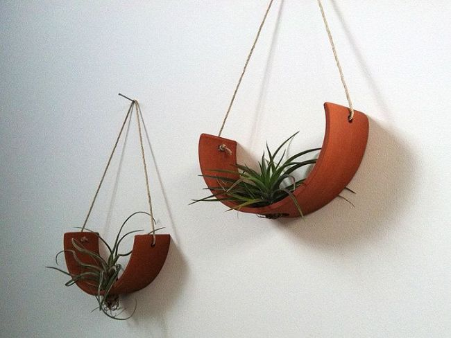 How to hang Air Plants