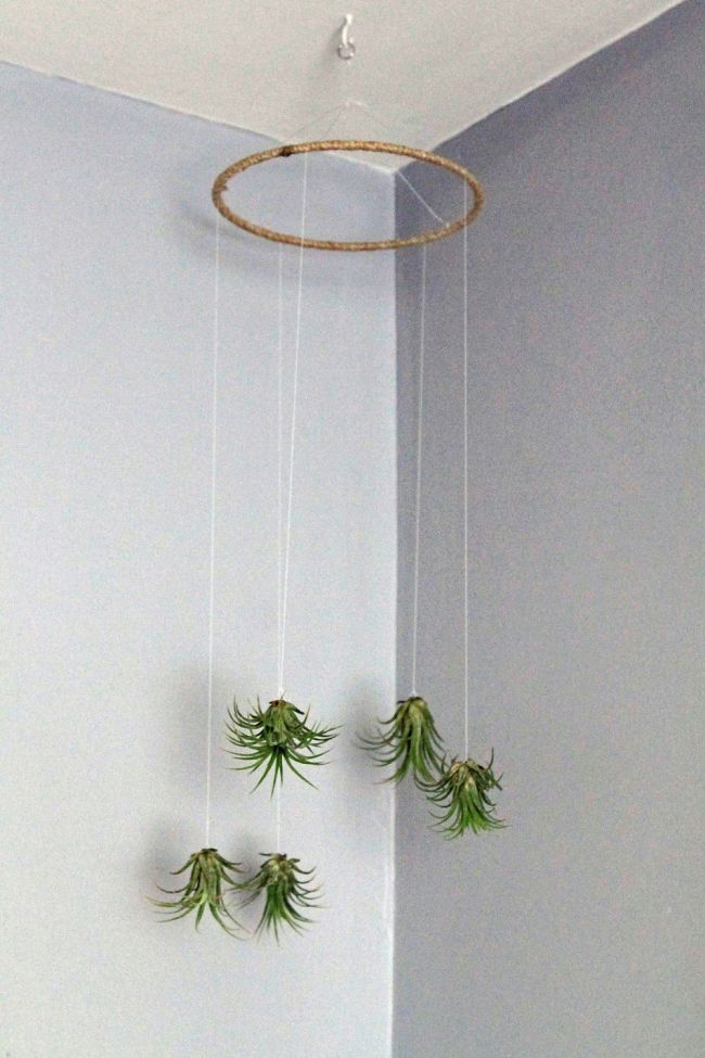Hanging Air Plant Mobile Holder