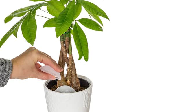 grow money tree