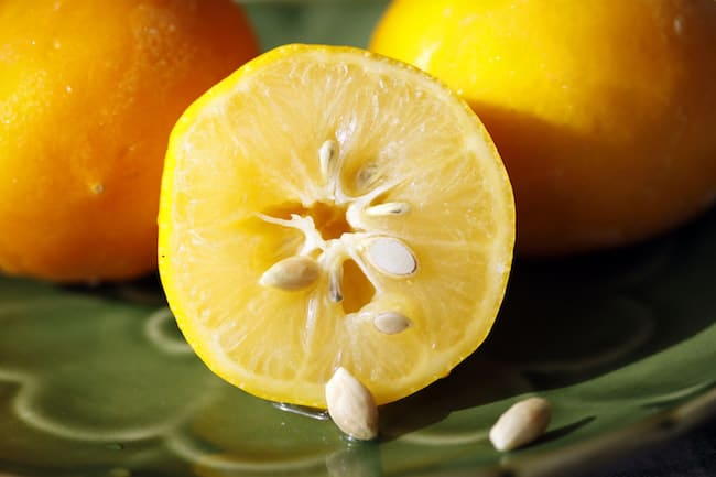 grow lemon from seeds