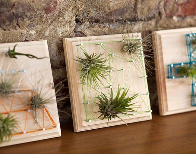 Air Plant Holder Ideas
