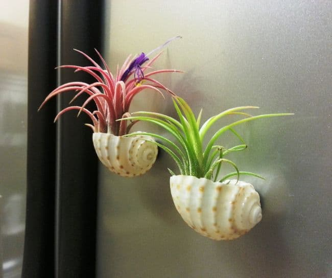 Air Plant Wall Art