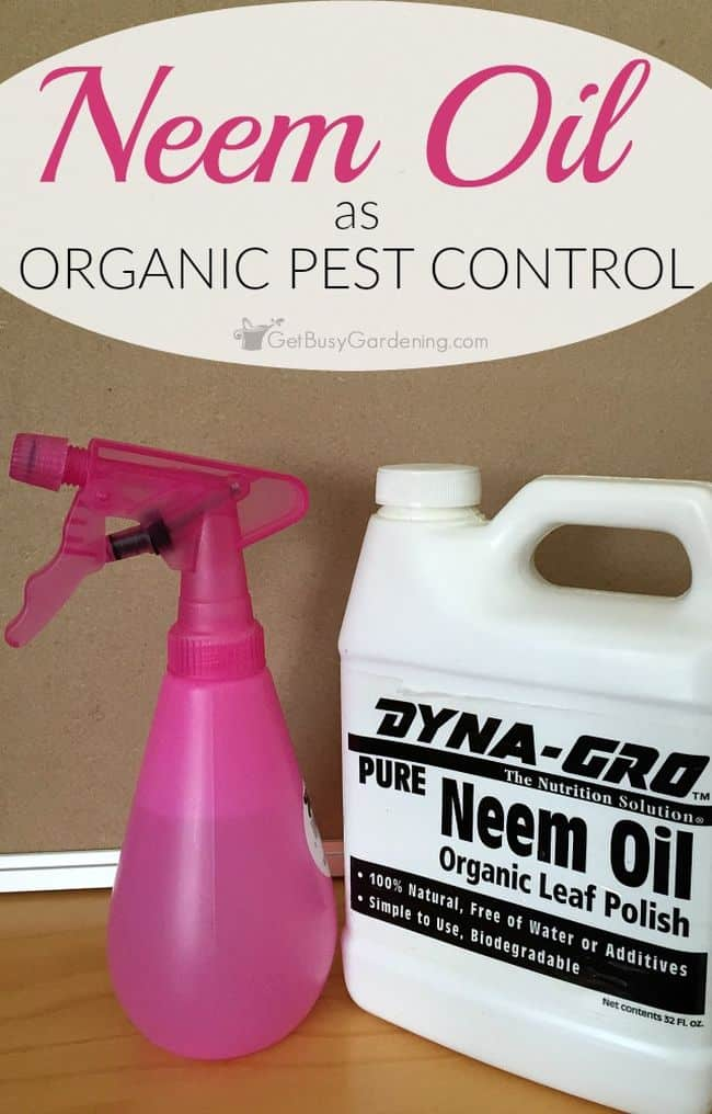 Neem Oil For Pest Control in Gardening