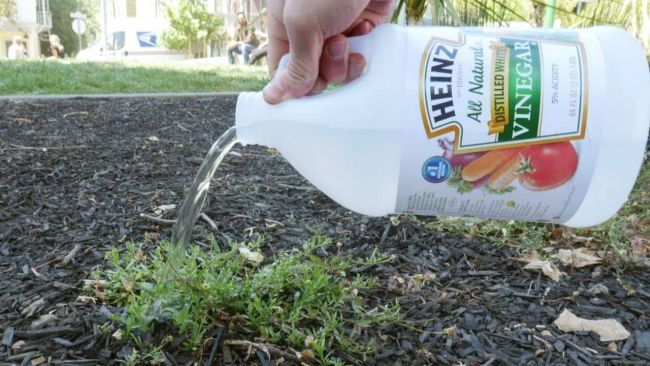 Gardening Hacks and Tips
