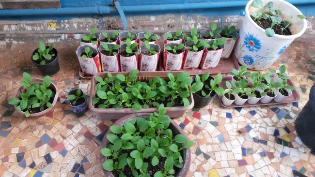 Fast Growing Vegetables in Pots