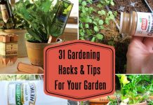 Gardening Hacks And Tips For Your Garden