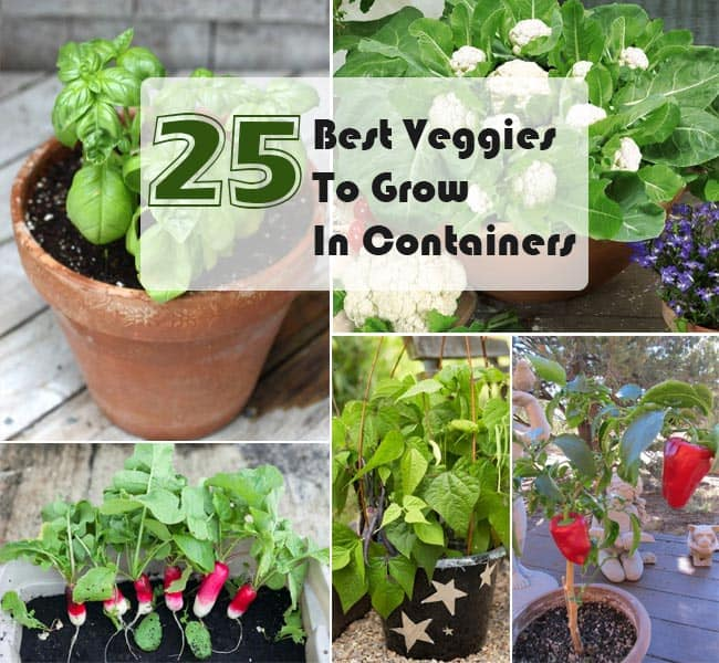 25 best veggies to grow in pots ways to grow vegetables in containers - Salads can grow pots eat fresh ...