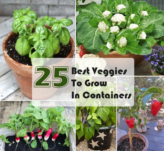Best Vegetables To Grow In Raised Beds: 25 Best Veggies To Grow In Pots : Ways To Grow Vegetables