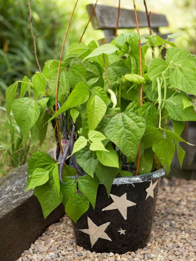 Best soil for Container Vegetables