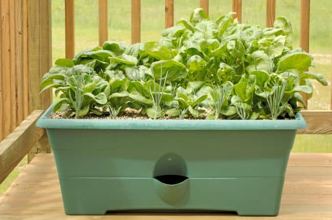 Balcony Vegetable Gardening