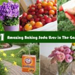 21 Baking Soda Uses in The Garden