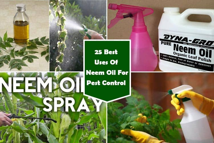 Neem Oil For Pest Control