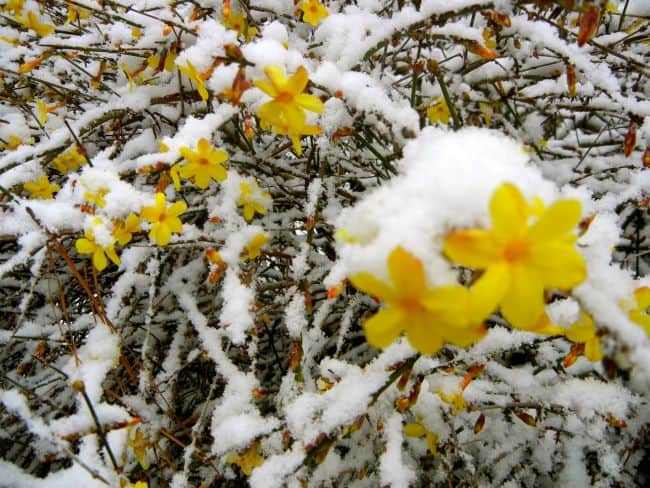 Flowers to Grow in Winter