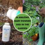 18 Amazing Baby Powder Uses in Your Garden