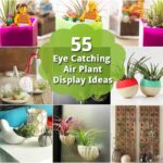 55 Eye Catching Air Plant Display Ideas