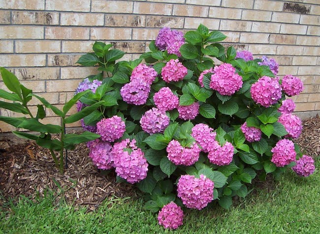 Small flowering shrubs for full sun