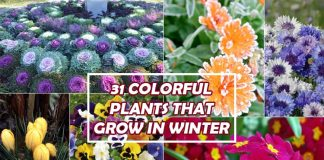 Plants That Grow In Winter