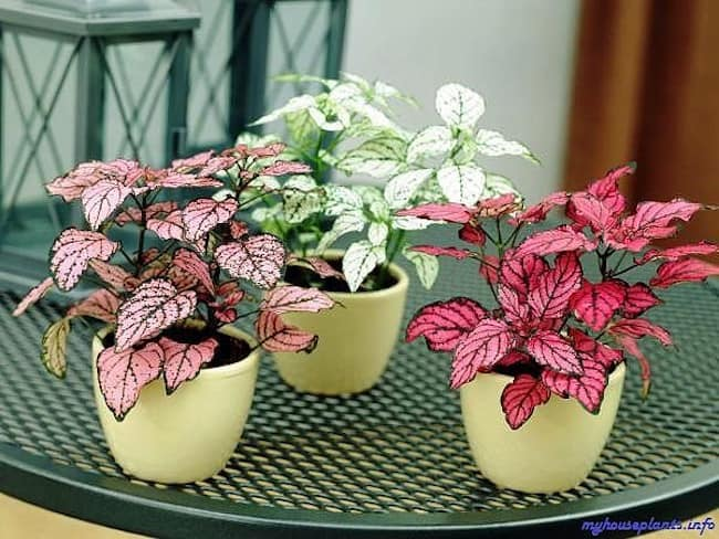 Coffee table plants