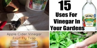 15 Uses Of Vinegar In The Garden