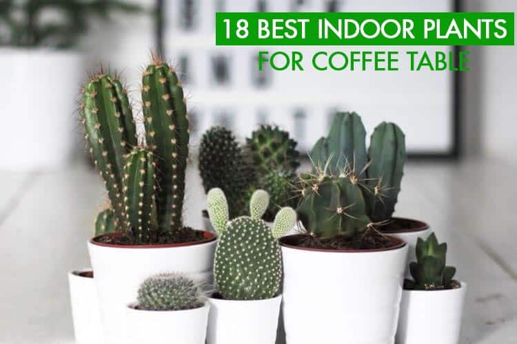 18 Best Indoor Plants For Coffee Table