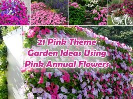 21 Pink Theme Garden Ideas Using Pink Annual Flowers