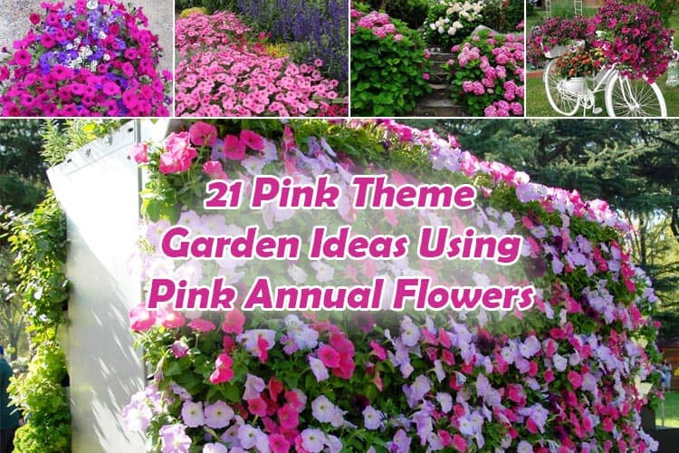 Pink Annual Flowers