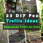 25 DIY Pea Trellis Ideas