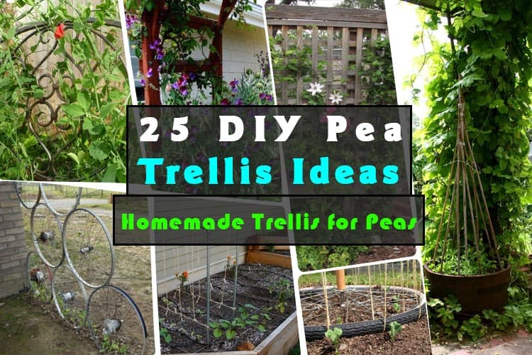 25 DIY Pea Trellis Ideas For Your Garden | Gardenoid