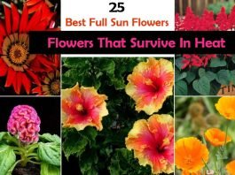 25 Flowers That Survive In Heat
