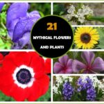 21 Mythical Flowers And Plants