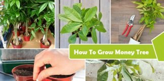 How to Grow Money Tree