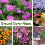 25 Best Ground Cover Plants