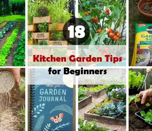 Kitchen Garden Tips for Beginners