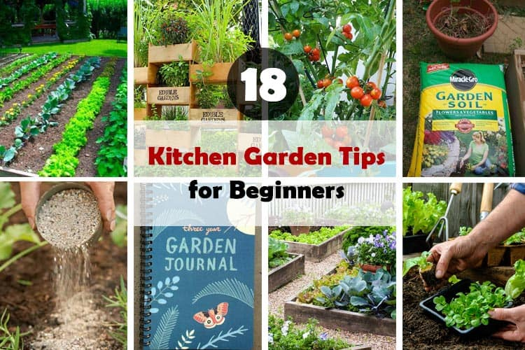 Kitchen Garden Tips