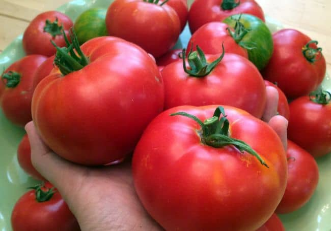Best Tomatoes to Grow in Pots