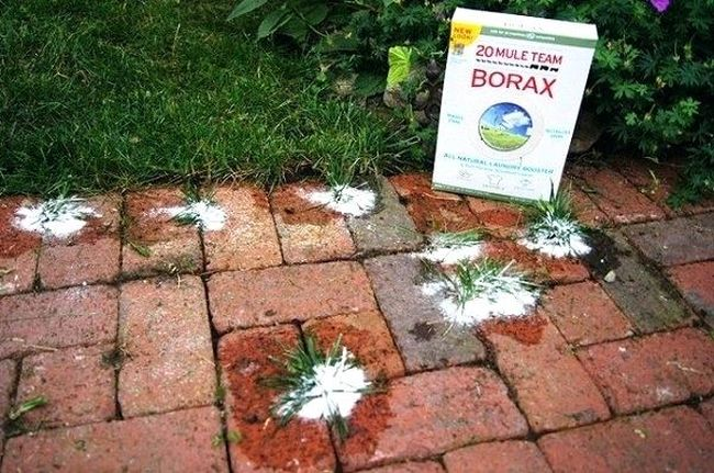 Borax as Weed Killer