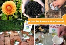 Uses for Borax in the Garden