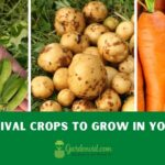 Best Survival Crops