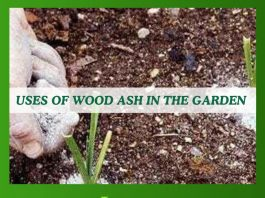 Uses of Wood Ash in The Garden