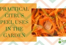 Citrus Peel Uses